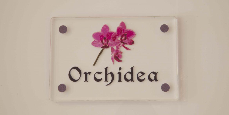 La Camelia Bianca - Orchidea Fucsia