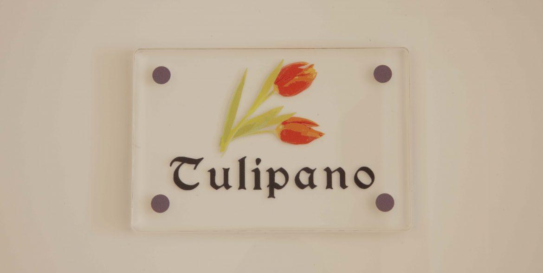 Tulipano Lilla